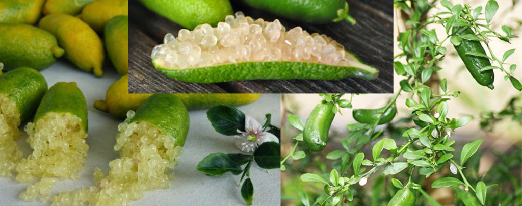 Agrumi esotici: limone caviale