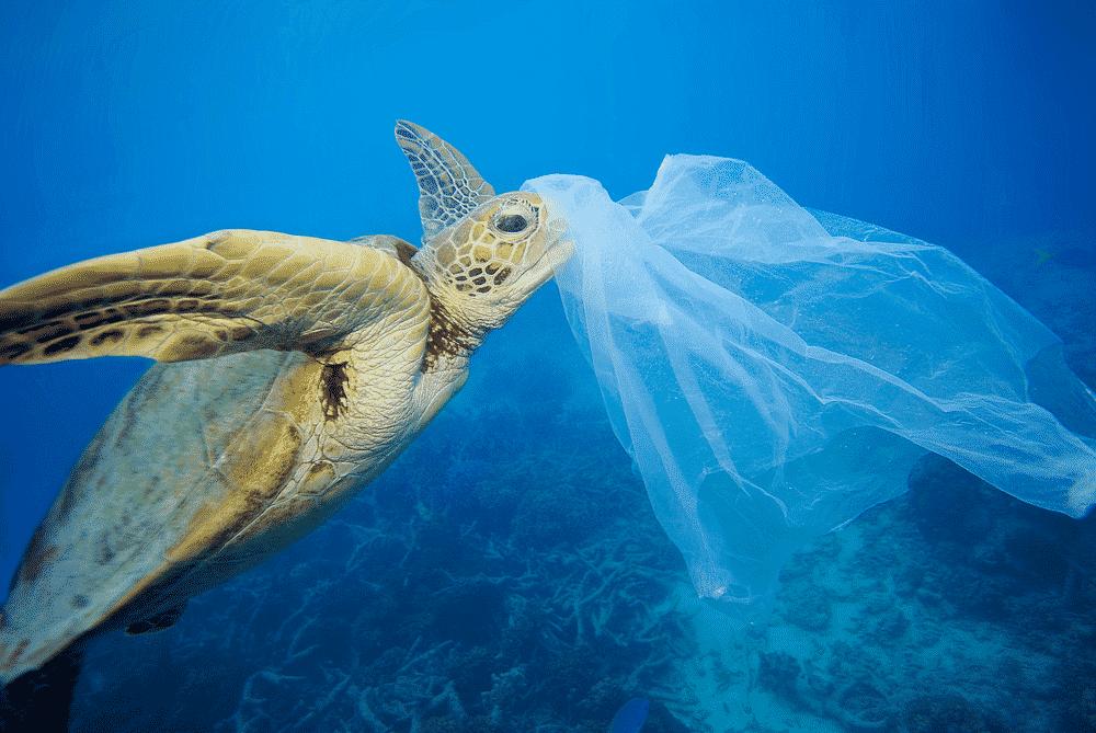 Le tartarughe sono tra gli animali più esposti ai detriti in plastica. (foto dal web) MMI Today |Giornata mondiale degli Oceani