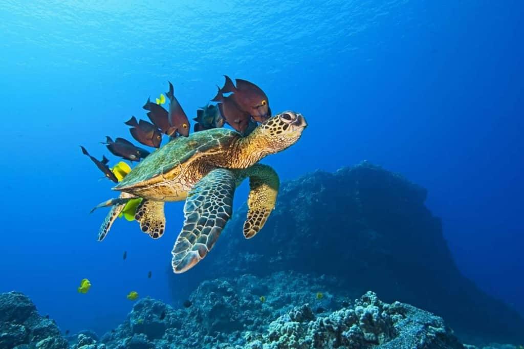 Tartarughe e pesci per la Giornata Mondiale degli Oceani, 8 giugno 2019. (foto dal web)